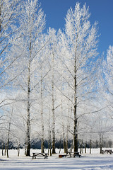 Winter Picnic (Mr. Gee) Tags: winter manitoba frost trees cold wintery canon 20d top20winter hoar hoarfrost flickrchallengegroup flickrchallengewinner