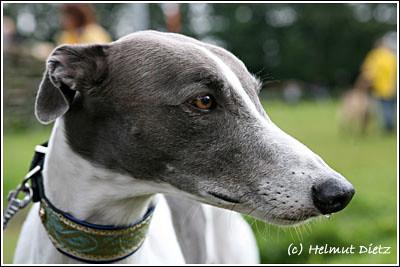 FCI_Windhund_Europameisterschaften_2006