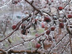 Ice Storm 2007 - 2