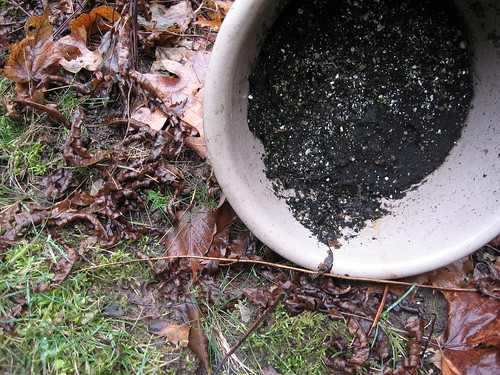 Flower Pot on Grass n Leaves