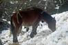 DSC_8433 (bedaio_bizirik) Tags: caballo caballos elurra zaldia zaldiak behorra izotza bedaio behorrak