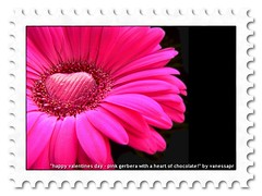 be my valentine - pink gerbera with chocolate ...