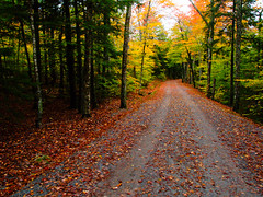 (scotteverett) Tags: autumn fall nature catchycolors landscape photo interesting earth favorites olympus fave getty organic e1 1454 ishpop scotteverett httptwittercomscotteverett