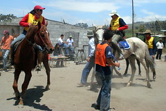 Wheeling In (Peter Gene) Tags: horse race ecuador cross country horserace galope pichincha perucho ginete ginetes jatunsicana guallayabamba