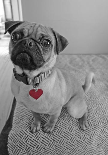 frank's heart