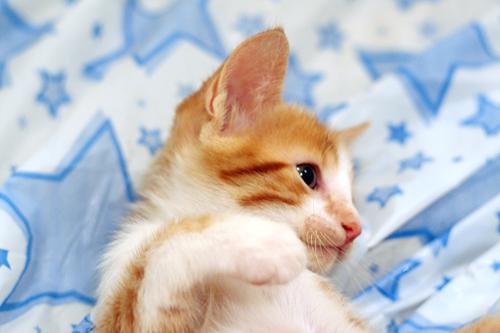 kitten picture_11