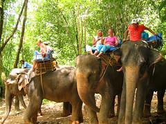Я решил посидеть на голове у слона.