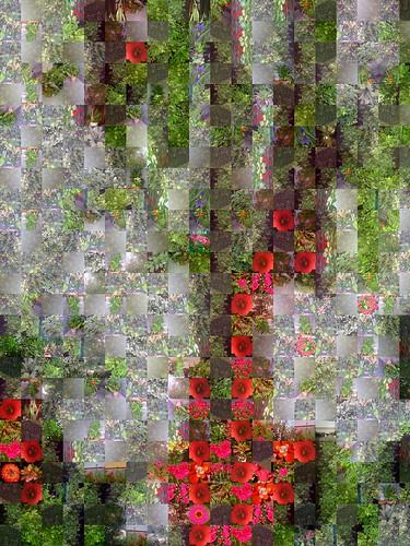 Gladiolos blancos y rojos