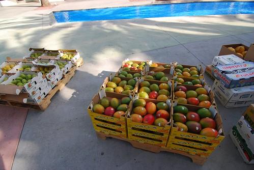 Foreign mangos