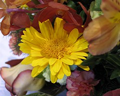 Central Mass Flower Show (Heartlover1717) Tags: centralmassachusettsflowershow centralmaflowershow flowershow flowers rose carnation orchid daisy alstroemeria