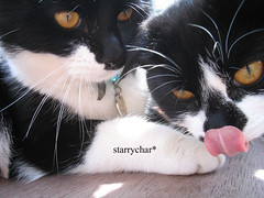 Bubl&Sunshine (Starry*Char) Tags: cats photographer young kittens 2006 awards rspca bubl sunchine commended