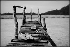 Embarcadero (DavidGorgojo) Tags: wood bw water madera agua bn embarcadero juncos naln sotodelbarco abigfave impressedbeauty