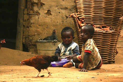 The Children and the Chicken