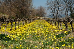 Sur le Luberon (jacoreflex) Tags: bravo provence colorphotoaward