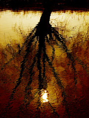 Adagio (Gary*) Tags: sunset orange sun abstract tree texture nature water silhouette reflections river bravo country firstquality magicdonkey lovephotography abigfave anawesomeshot flickrdiamond