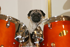 Shelby on drums