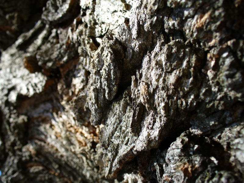 Textures: Bark