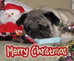 Merry Pugmas! - by KaroliK