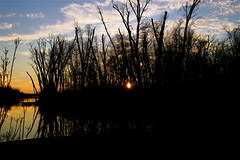 Setting Behind The Trees (mightyquinninwky) Tags: trees sunset sky water beautiful topv111 clouds reflections evening perfect december kentucky fave lexingtonky richmondroad fayettecounty canoneosdigitalrebel centralkentucky p1f1 bfv1 landscapebfv1 naturebfv1 ellserlielake