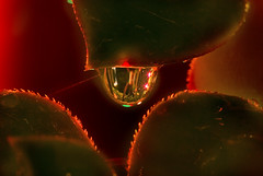 Fairy Lights in a Water Drop