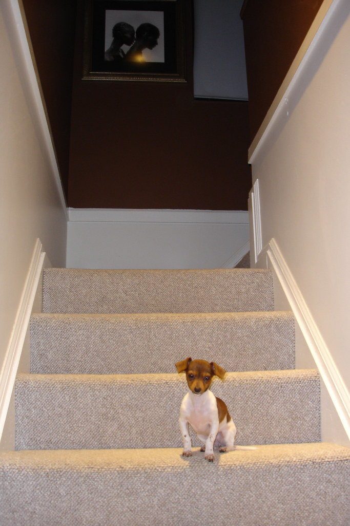 Stairs to Master Bedroom- Cutest Dog Ever, not included with house :)