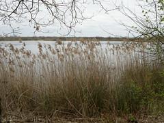 roseaux (philippejack) Tags: park france nature water garden landscape eau bordeaux jardin lac roseaux etang gironde