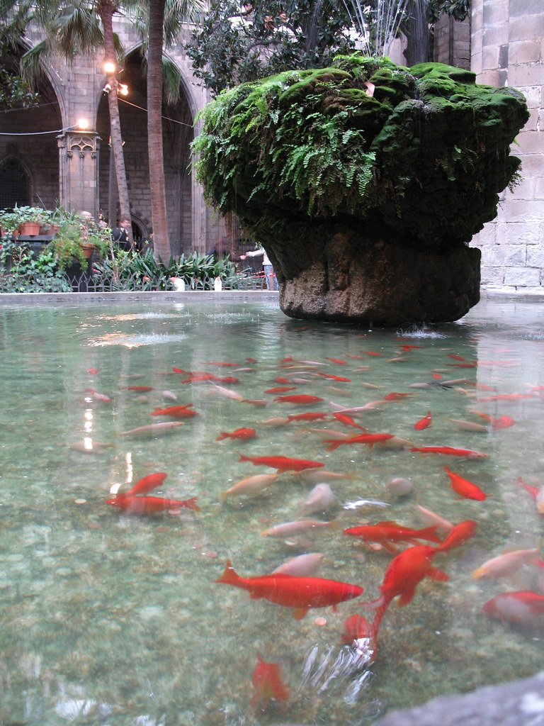 Goldfish in the courtyard