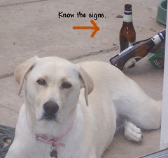 Dogs Have Vices Too