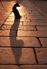 crisi d'identit di un cane che si credeva un gatto (rosa_pedra) Tags: city dog silhouette torino para tag josh pasquale vs piazzasancarlo controluce italians insolito sagoma incertezza tuttocitt lifecity shadowhund 10100dog 0x7f5640 holidaysvacanzeurlaub paratissima tcnsalotto mcb1414 labcoop