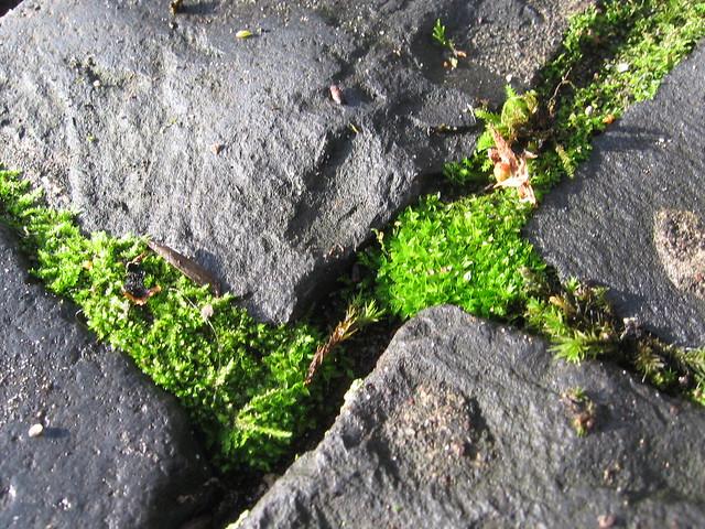 moss & cobblestones
