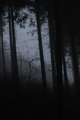 In The Woods II (bogenfreund) Tags: wood fog dark nebel gloomy wald dunkel unheimlich