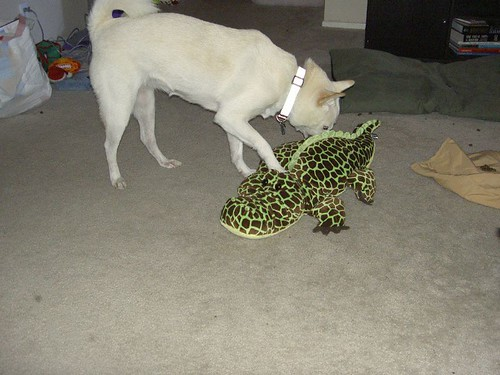 Noeligator 'Rasslin (2)