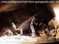 patagonian dinos