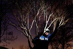 Day 118 - Long Exposure Stand Still (Paul Octavious) Tags: tree japanese star maple long exposure flash trails treehugger bathingape bape naugatuck 365days