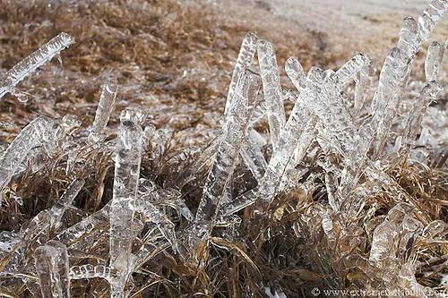 350128009 4993fc9e8d Icy Photos