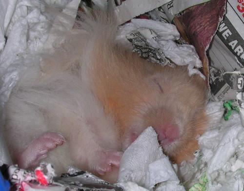 Sleeping Lucian
