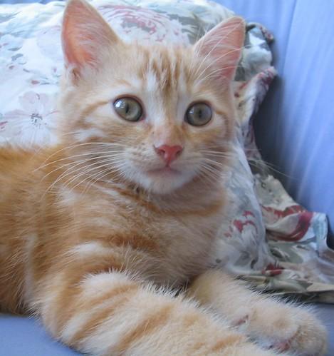gui o gato s most interesting flickr photos picssr