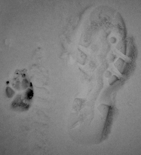 Dog Dad Feet Snow