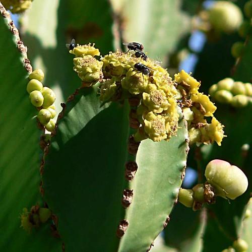 Kaktus_1