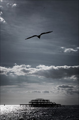 uk_brighton_burnt-pier_seagull_tall