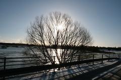 Den første sne / The first snow (Michael Lars Thor Rasmussen) Tags: winter denmark bur holstebro