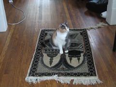 """Ang: """"My cat is so Muslim"""""""