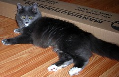 Ah-lo Dougal! (electric boogalo0) Tags: cats animals kitty kitties