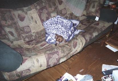 Blanket Head