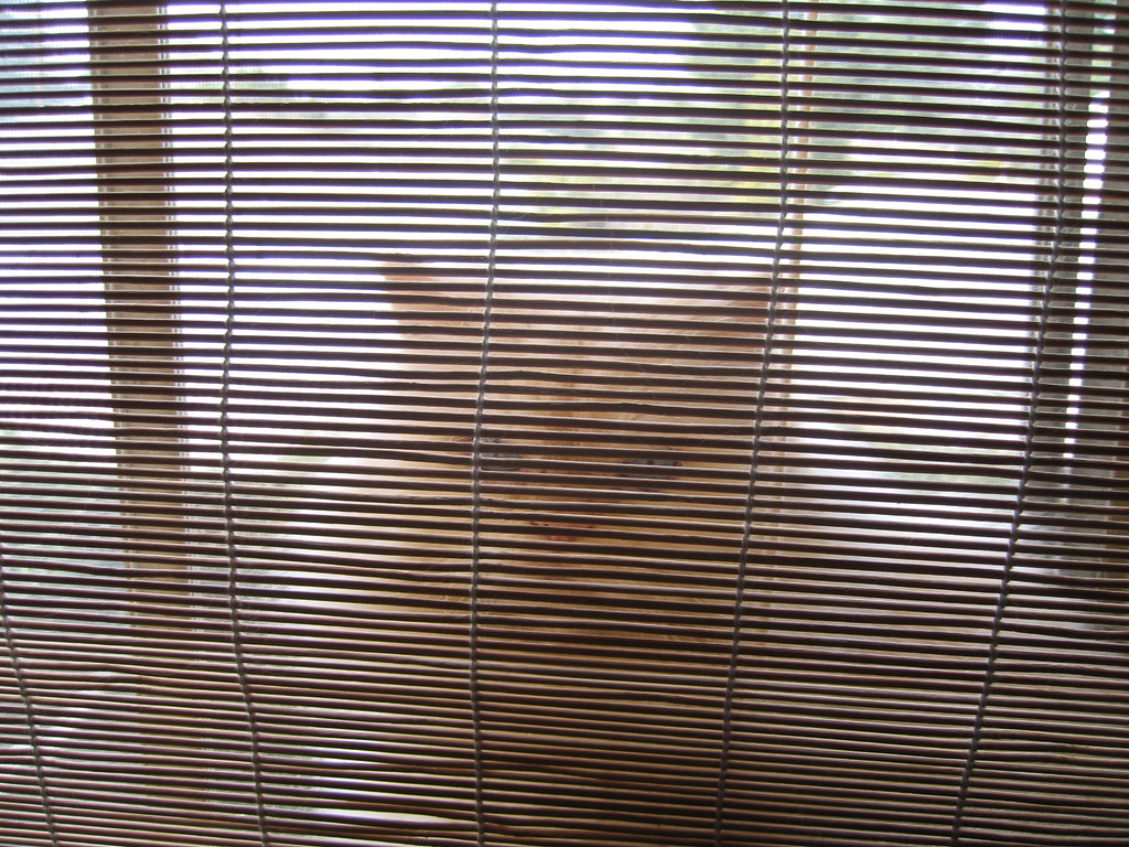 Kitty and Bamboo Blinds