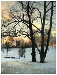 Sinebrychoff Park, winter morning