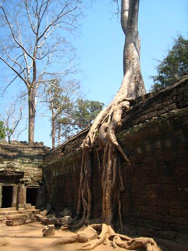 奇樹處處的塔普倫寺