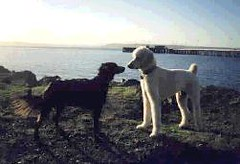 Offleash Areas: Edmonds Marina Park