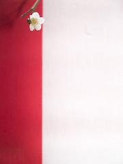 (Masahiro Makino) Tags: red white japan digital kyoto plum olympus adobe zuiko lightroom e500 1454mm f2835 kitanotenmanguh