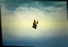 freedom (*atrium09) Tags: sky bird nature topf25 clouds spain topf50 bravo searchthebest free olympus cielo nubes tenerife libre e330 supershot instantfave libertadad atrium09 mywinners abigfave shieldofexcellence 200750plusfaves rubenseabra